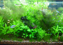 CO2 Systems & Planted Aquariums