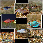 Popular Value Packs, Freshwater Fish