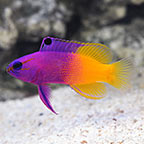 Beginner Fish: Tropical Fish for Beginners in Saltwater Aquariums