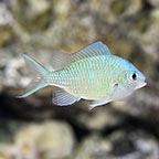 Customer Favorites, Marine Fish  - Save 25%