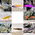 Popular Value Packs, Marine Fish