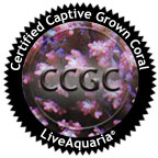 Certified Captive Grown Coral