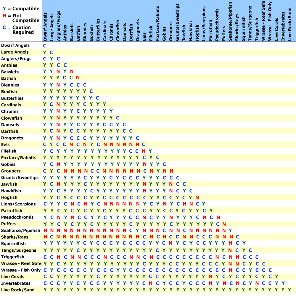 Saltwater Fish Compatibility Chart